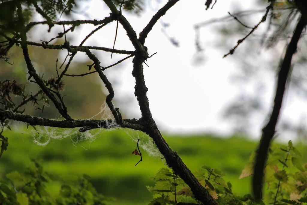 Irlande-KellsPrieure-1-11