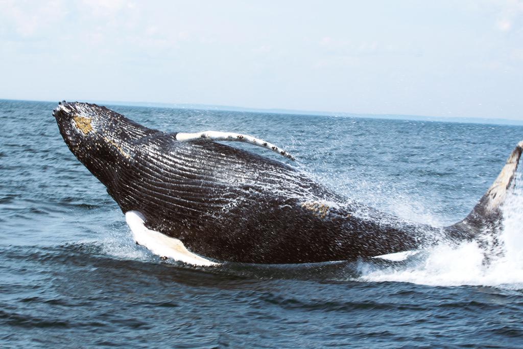 Canada-NB-Grand-Manan-Baleines-1-4a