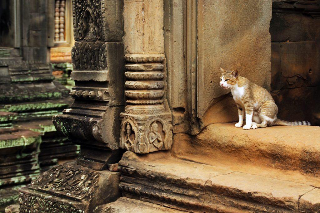 Angkor9 (2)