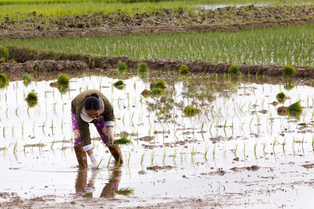 Myanmar-Kengtung-1-31