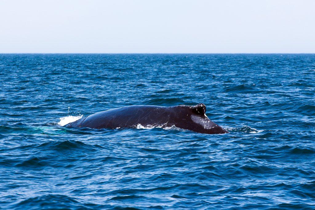 Canada-NB-Grand-Manan-Baleines-1-10a