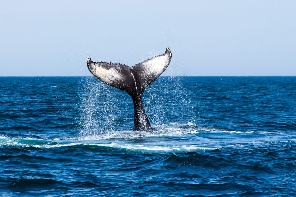 Canada-NB-Grand-Manan-Baleines-1-9a